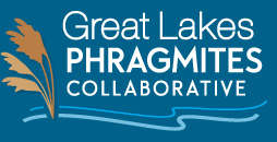 Great Lakes Phragmites Collaborative