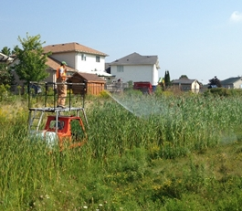 Phragmites-free by 2020 in St. Thomas, Ontario